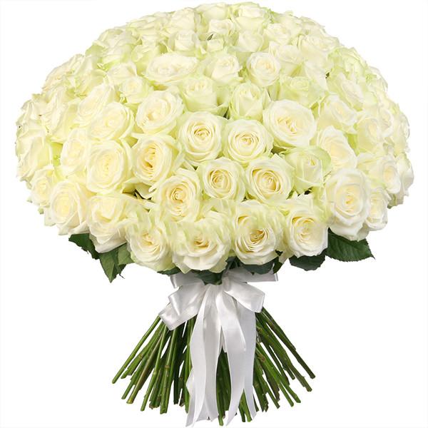Розы Россия белые